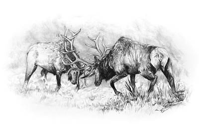 Elk Drawing - The Scuffle by Aaron Spong