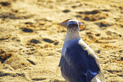 Photograph - The Seagull And His Sand-crusted Fish 3 Of 3 by Jason Politte