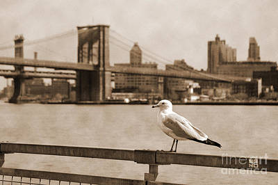 Newyork08 Photograph - The Seagull Of The Brooklyn Bridge Vintage Look by RicardMN Photography
