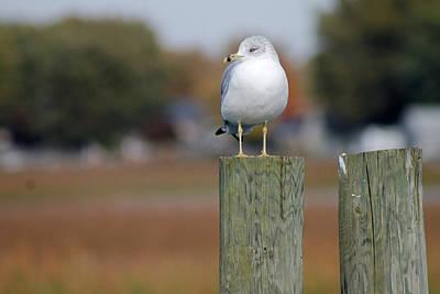 Photograph - The Seagull On The Pole by Danielle Allard