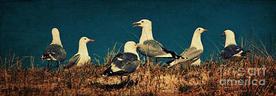 The Seagulls Art Print by Angela Doelling AD DESIGN Photo and PhotoArt