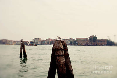 Farmhouse Rights Managed Images - The Seagulls Royalty-Free Image by Erin Johnson