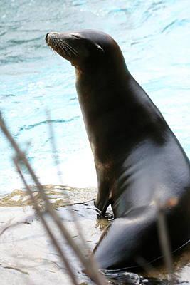 Photograph - The Sea Lion Life by Angela Rath