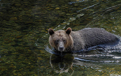 Photograph - The Search For Salmon by Tim Bryan