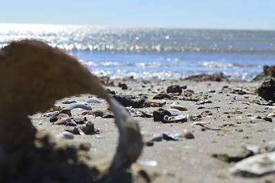 Beach Photograph - The Seashell by Eileen Corbel