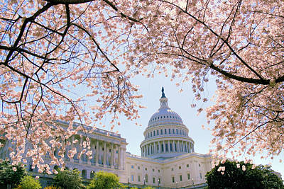 Capitol Building Photograph - The Seasonal Experience by Mitch Cat