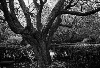 Photograph - The Secret Garden Tree by Cornelis Verwaal