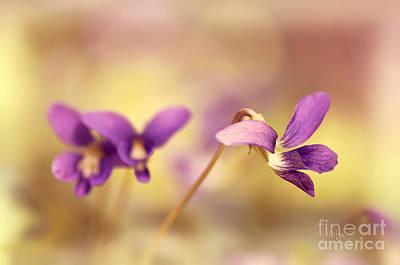 The Secret World Of Wild Violets Art Print by Lois Bryan
