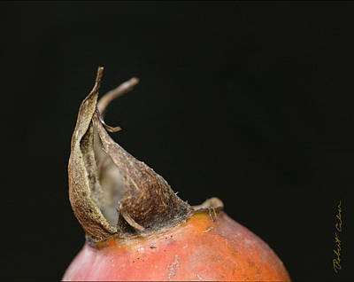 Photograph - The Seed Pod by Robert Culver