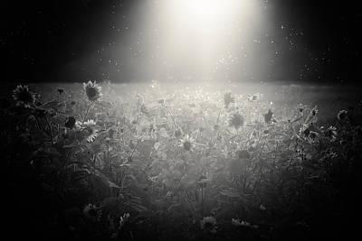 Pollen Photograph - The Select Few by Chris Fletcher