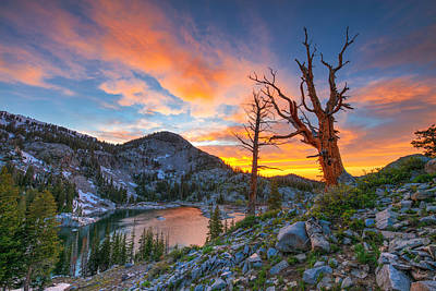 Tree Photograph - The Sentinel  by Dustin  LeFevre