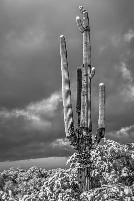 Photograph - The Sentinel by James Capo