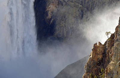Absaroka Photograph - The Sentinel Of The Lower Falls by Bruce Gourley