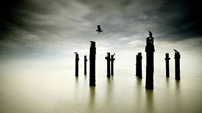 Sea Bird Wall Art - Photograph - The Sentinels by Paulo Dias