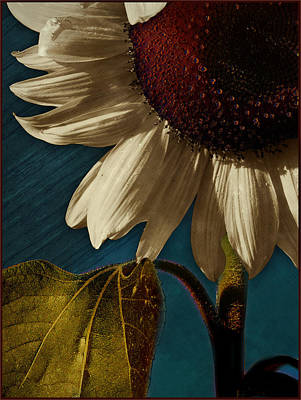 Sunflower Print by Bernie  Lee