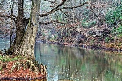Cypress Swamp Photograph - The Sepulga River by JC Findley