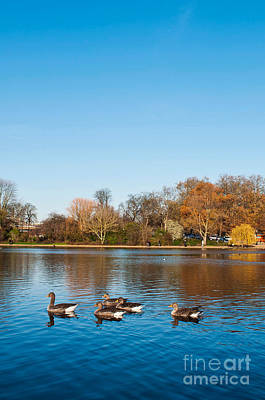 Photograph - The Serpentine Ducks by Luis Alvarenga