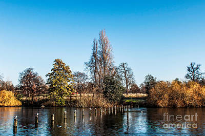 Photograph - The Serpentine Seagulls by Luis Alvarenga