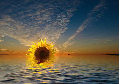 Photograph - The Setting Sun-flower by Geraldine Alexander
