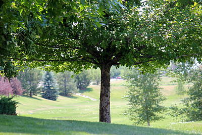 Photograph - The Shade Tree by Trent Mallett