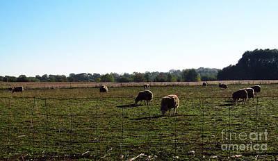 Target Threshold Watercolor - The Sheep at Midday by Tina M Wenger