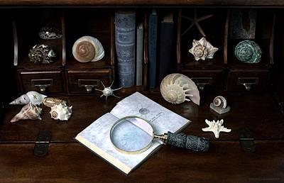 Seashell Photograph - The Shell Collector by Chrystyne Novack