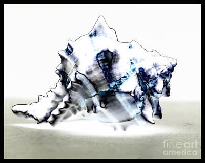 Artistic License Photograph - The Shell by Deb Henman