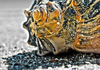 Art Print featuring the photograph The Shell On The Sand by Sebastian Mathews Szewczyk