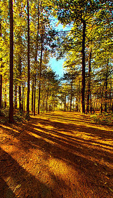 Pine Trees Photograph - The Short Cut by Phil Koch