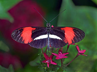 Fluttering Photograph - A Beautiful Showing by Sandi OReilly