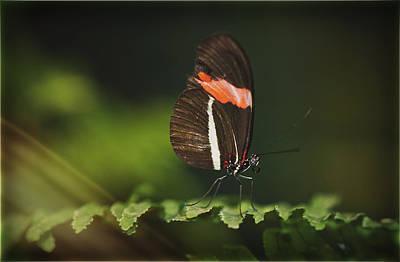 Photograph - The Simplicity Of Nature  by Saija  Lehtonen