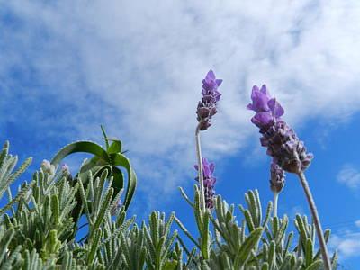 Lavender Photograph - The Sky Is The Limit by Leana De Villiers