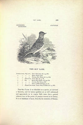 The Sky Lark Art Print by British Library