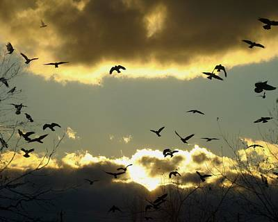 Starlings Digital Art - The Sky Opened by Gothicrow Images