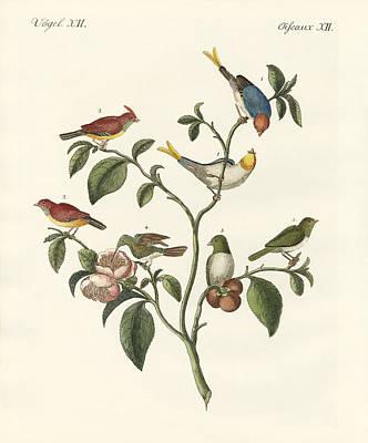 Sparrowhawk Drawing - The Smallest Birds by Splendid Art Prints