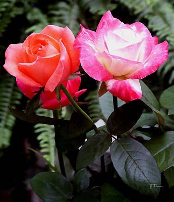 Art Print featuring the photograph The Smell Of Roses by James C Thomas