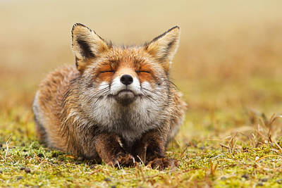 Red Photograph - The Smiling Fox by Roeselien Raimond