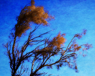 Photograph - The Smoke Tree by Timothy Bulone