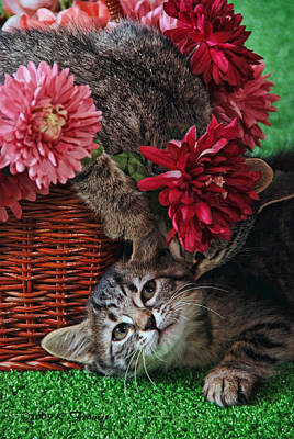 Gray Tabby Photograph - The Sneak Attack by Kenny Francis