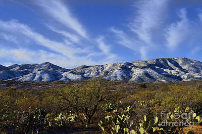 Photograph - The Snowy Santa Catalinas by Donna Greene