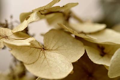 The Soft Whisper Of Petals Art Print