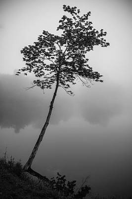 Photograph - The Solitary Tree by Mark Robert Rogers