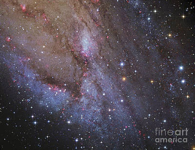 Photograph - The Southwest Spiral Arm Of Messier 31 by Robert Gendler