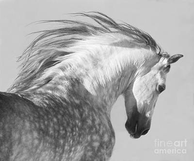 Wild Horses Photograph - The Spanish Stallion Tosses His Head by Carol Walker