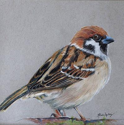 Sparrow Drawing - The Sparrow by Jill Van Iperen