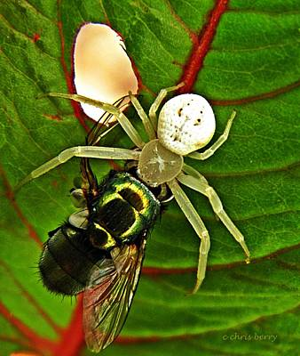 Photograph - The Spider And The Fly  by Chris Berry