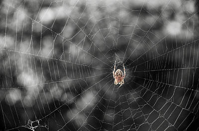 Photograph - The Spider by Mary Lee Dereske