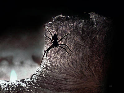 Photograph - The Spider On The Candle - Subtly Colored Version by Menega Sabidussi
