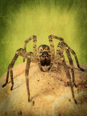 Photograph - The Spider Series X by Marco Oliveira