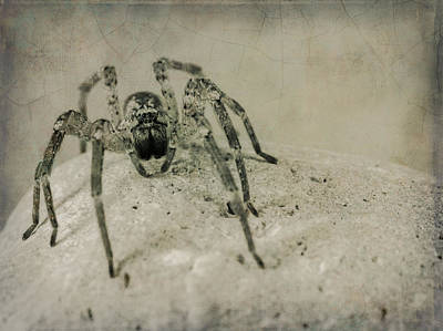 Photograph - The Spider Series Xi by Marco Oliveira